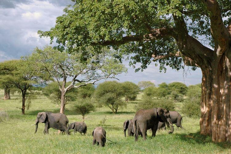 Tanzanija slonovi priroda